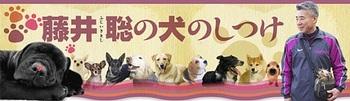 犬のしつけ藤井聡.jpg